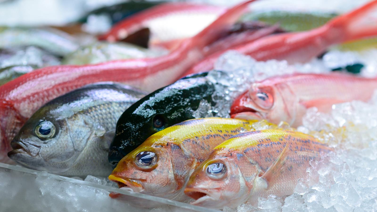 糖質制限中に魚は食べても大丈夫?気になる魚の糖質量と注意点とは?